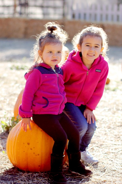 pumpkinpatch_2